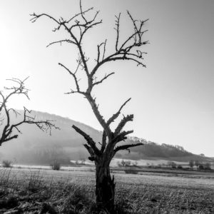 Kahler Baum beim Fotospaziergang